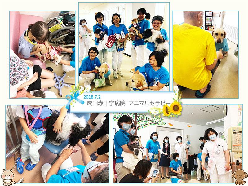 7月2日 成田赤十字病院 アニマルセラピー